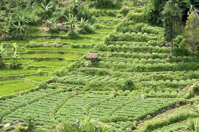 Terraced Rice Paddy and Vegetables Growing on the Fertile Sloping Hills of Central Java Photographic Print by Annie Owen
