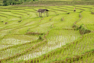 Farmer in Rice Paddy Fields Laid in Shallow Terraces Photographic Print by Annie Owen