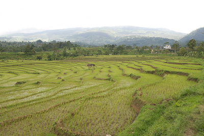Rice Paddy Fields in Shallow Terraces Photographic Print by Annie Owen