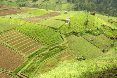 Fertile Smallholdings of Vegetables Covering the Sloping Hills in Central Java Photographic Print by Annie Owen