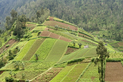 Fertile Hills in Central Java Covered with Tiny Smallholdings Growing Vegetables Photographic Print by Annie Owen