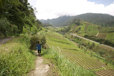 Man Walking Carrying Heavy Bundles of Rice Straw Past Fertile Smallholdings Full of Vegetables Photographic Print by Annie Owen
