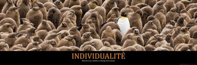 Individualité (French Translation) Photo