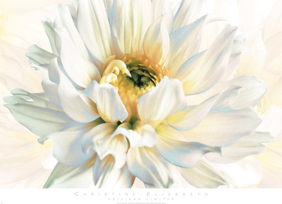 Painted Petals I Print by Christine Elizabeth