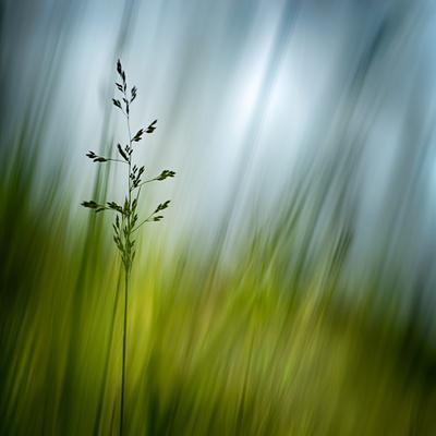 Morning Grass Fotografisk tryk af Ursula Abresch