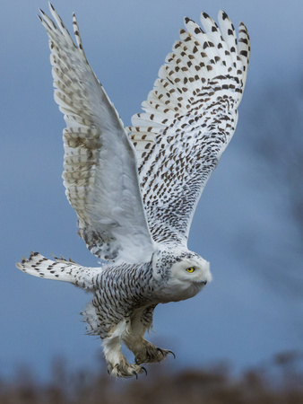 Bird of Prey Lámina fotográfica por Art Wolfe