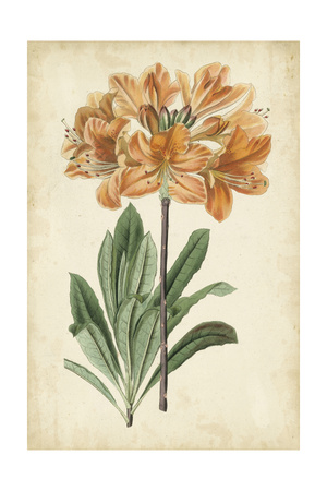 Botanical Display V Posters by  Vision Studio