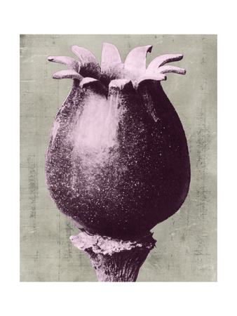 Blossfeldt Redeux I Poster von  Vision Studio