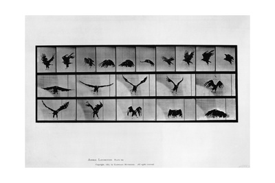 Animal Locomotion Giclee Print