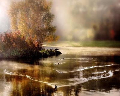 Morning Solace Art by Irene Weisz