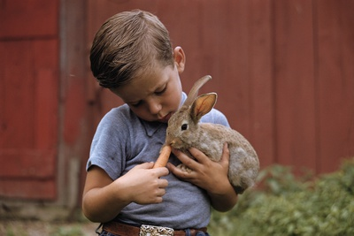 Boy Feeding a Rabbit Photographic Print by William P. Gottlieb