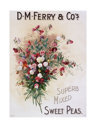 D.M. Ferry and Co's Superb Mixed Sweet Peas Poster Giclee Print