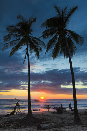 Surfer and Palm Trees at Sunset on Playa Guiones Surf Beach at Sunset Photographic Print by Rob Francis