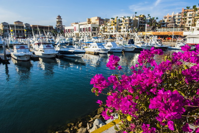 Colourful Flowers in the Harbour of Los Cabos, Baja California, Mexico, North America Photographic Print by Michael Runkel