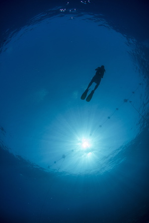 Silhouette of One Scuba Diver and Sunball Underwater, Fish Eye View, Egypt, North Africa, Africa Photographic Print by Mark Doherty