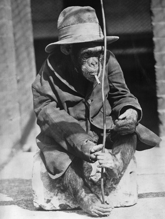 Monkey Wearing Jacket Smoking Cigarette Stampa fotografica