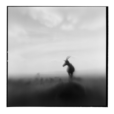 Topi Antelope, Masai Mara Game Reserve, Kenya Photographic Print by Paul Souders