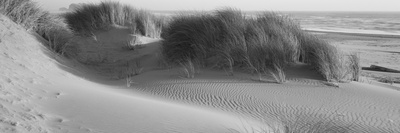 Grass on the Beach, Pacific Ocean, Bandon State Natural Area, Bandon, Oregon, USA Photographic Print