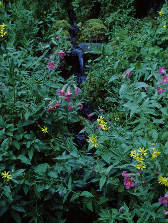 Flowers on Plants, Castle Crest Wildflower Garden Trail, Munson Creek Photographic Print by Green Light Collection