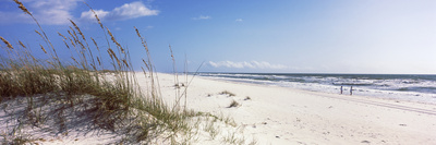 Tall Grass on the Beach, Perdido Key Area, Gulf Islands National Seashore, Pensacola, Florida, USA Photographic Print