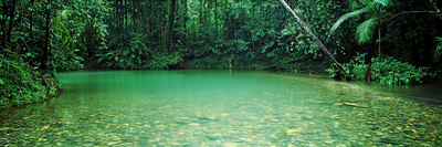 Cooper Creek Flowing Through a Forest, Cape Tribulation, Daintree River, Queensland, Australia Photographic Print