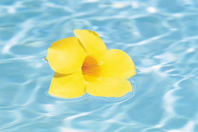 Yellow Flower in Water Photographic Print