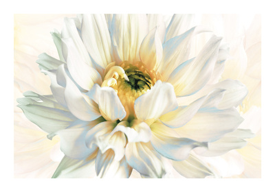 Painted Petals I Giclee Print by Christine Elizabeth