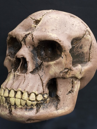 Neanderthal or Neandertal Man - Reconstructed Skull Photographic Print