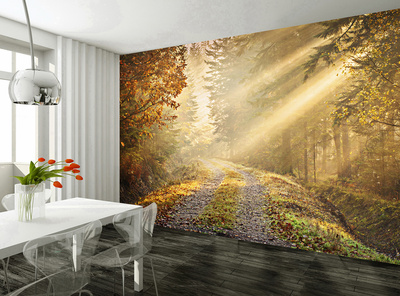 Autumn Forest Wallpaper Mural Bildtapet