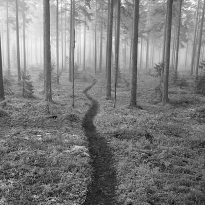 Through the Trees B&W Giclée-Druck von Andreas Stridsberg