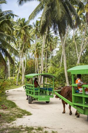 Ox Drawn Cart Taxi, L'Union Estate Plantation, La Digue, Seychelles Photographic Print by Jon Arnold