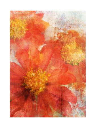 Tithonia Bloom 2 Art by Ken Roko