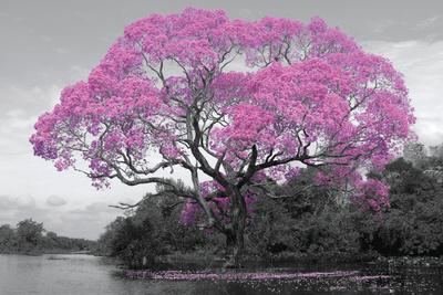 Tree - Blossom Planscher