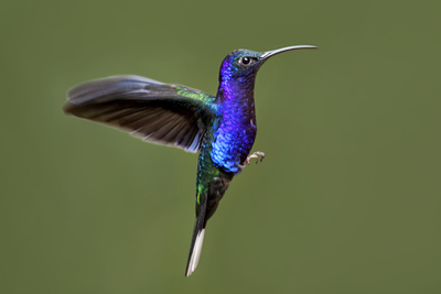 Hummingbird VII Photographic Print by Larry Malvin