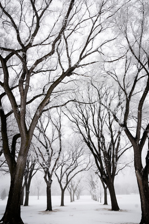 Frosted Trees I Photographic Print by Beth Wold