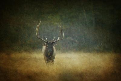 Six Point Bull Photographic Print by Roberta Murray