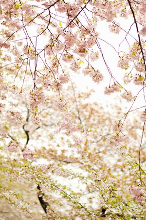 In Bloom XVIII Photographic Print by Karyn Millet