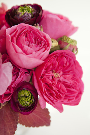 Peony Bouquet II Photographic Print by Karyn Millet