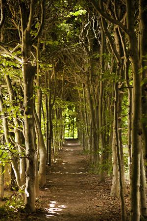 Secret Garden III Photographic Print by Karyn Millet