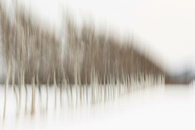 Birch Blur I Photographic Print by Larry Malvin
