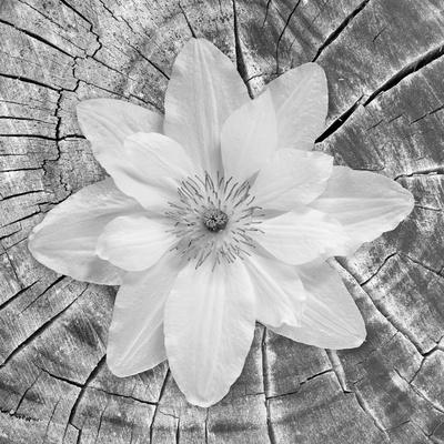 Bloom II Photographic Print by Kathy Mahan