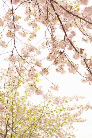In Bloom XIX Photographic Print by Karyn Millet