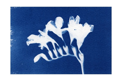 Freesia, 2013 Giclee Print by Elspeth Ross