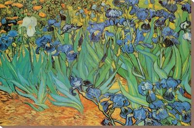 Garden of Irises (Les Irises, Saint-Remy), c. 1889 Stretched Canvas Print by Vincent van Gogh