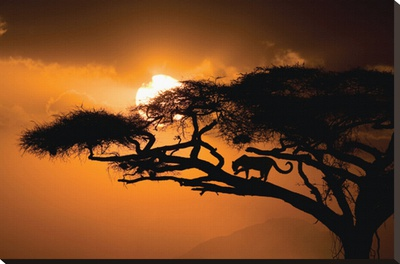 African Sky Stretched Canvas Print