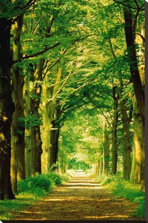 Forest Path Stretched Canvas Print by Hein Van Den Heuvel