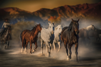 Mustangs on the Move Giclee Print by Bobbie Goodrich