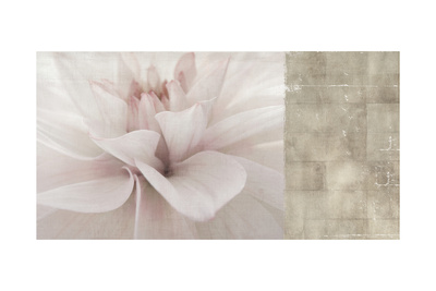 Softness Prints by Andrew Michaels