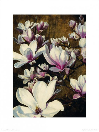 Magnolia Silk Prints by Sarah Caswell