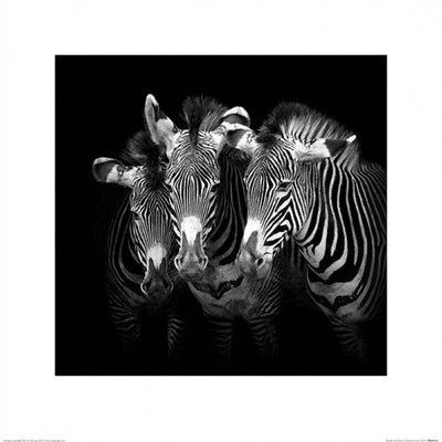 Shades of Grevy Prints by Marina Cano